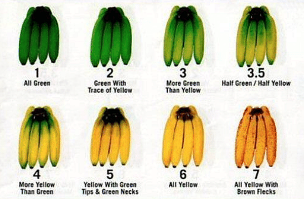 Ripening Stages of Bananas
