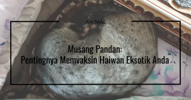 Palm Civet Vaccination Exotic Animal Veterinary